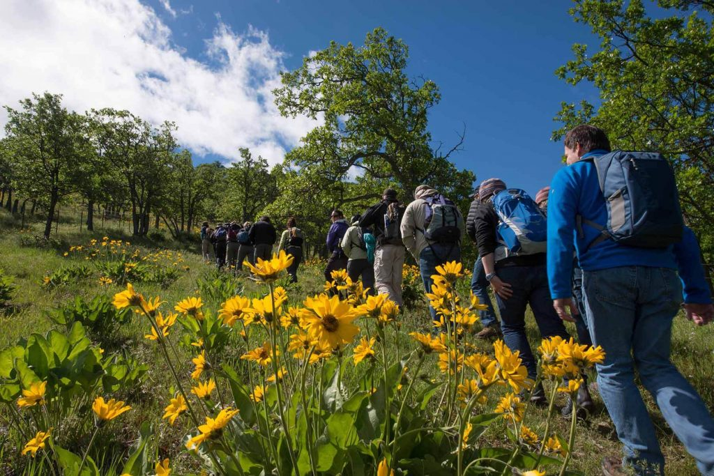 Tourgoers ascend a hillside at a conserved wildflower meadow outside of The Dalles, Oregon. Photo by Brian Chambers Photography