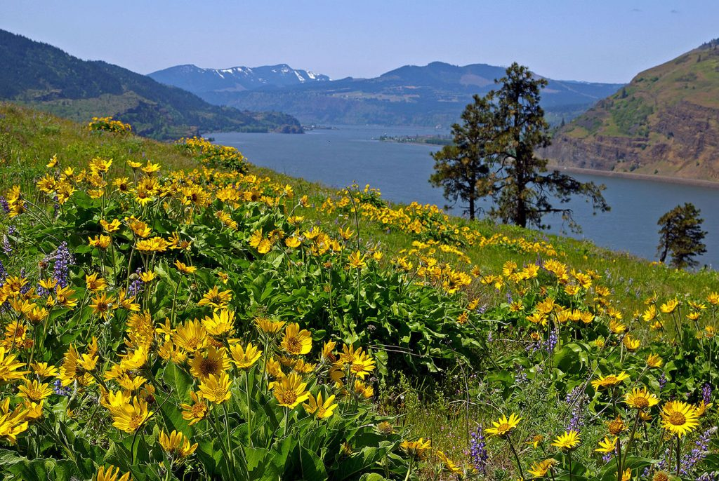 Friends of the Gorge. Mosier Plateau by Jozsef Urmos