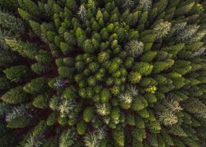 Forest, Photo Credit: Jasman Mander