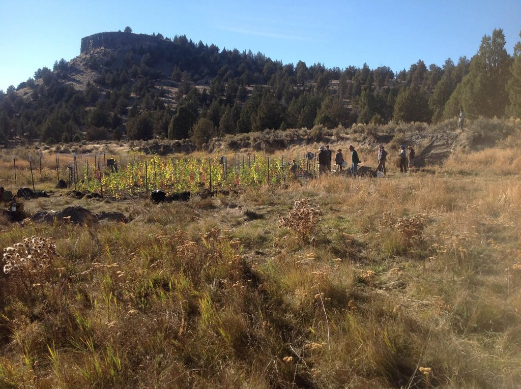 Oregon Desert Land Trust. In the high desert, water means life. Here volunteers plant native vegetation along the South Fork Crooked River to help restore this important habitat. Photo: Oregon Natural Desert Association