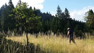 A view of oak restoration at Mountcrest Forest. Photo Credit: PFT staff