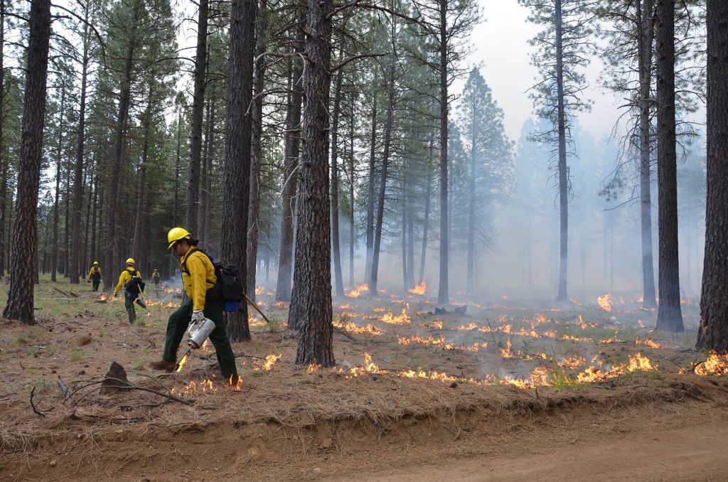 The Nature Conservancy. Rx Fire. Mitch Maxson