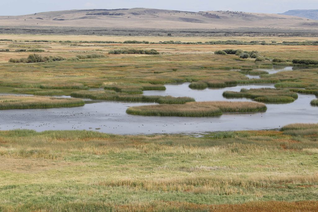The Wetlands Conservancy. Harney County by Brandyn Six