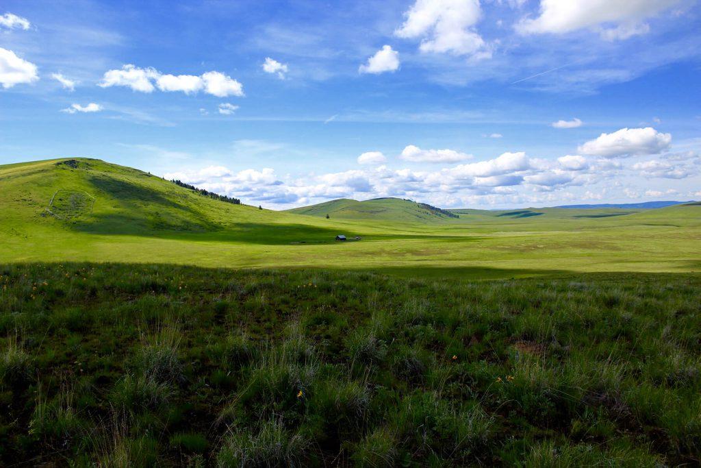 The Nature Conservancy. Zumwalt Prairie