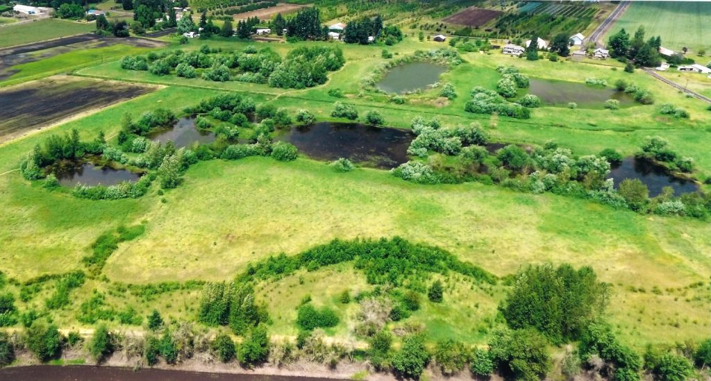Conservation easement near Salem, Or photo by Ducks Unlimited