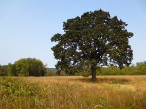 Owens Farm at Greenbelt Land Trust