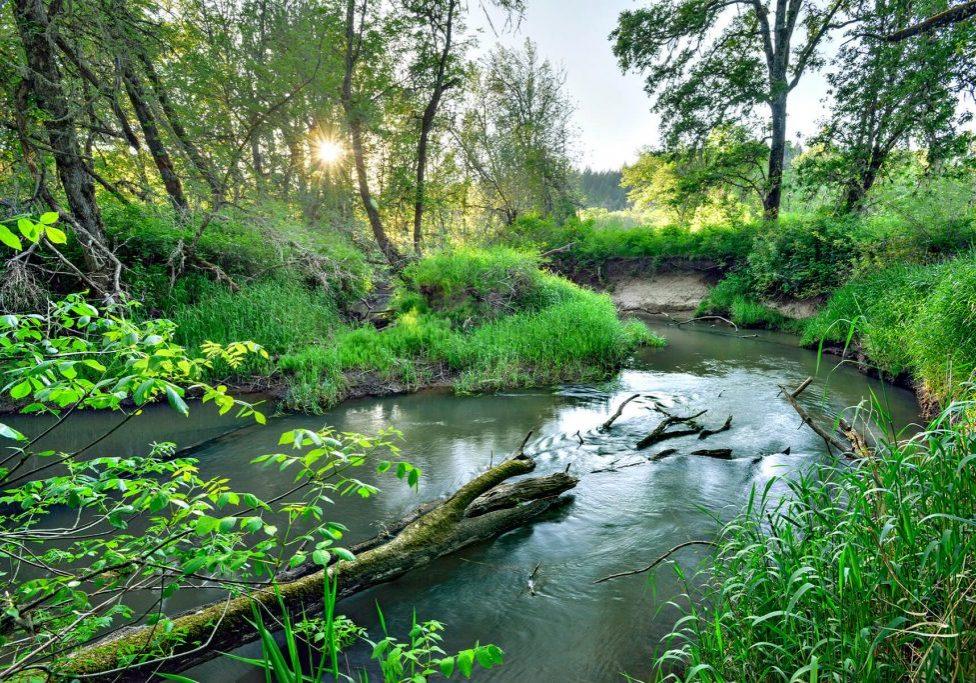 McKenzie River Trust. Coyote Spencer Wetland Tim Giraudier - Beautiful Oregon