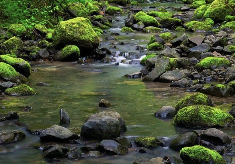 Stream, Forest Park Conservancy