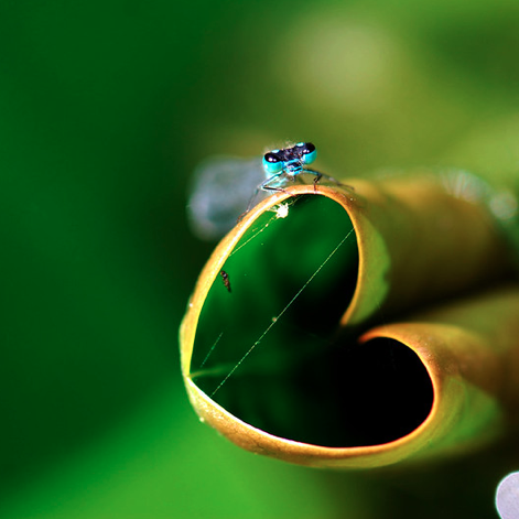 Leaf heart by Flickr user F/stas